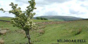 stouphill gate wildboar.jpg